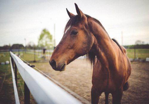 Een bruin paard in een wei