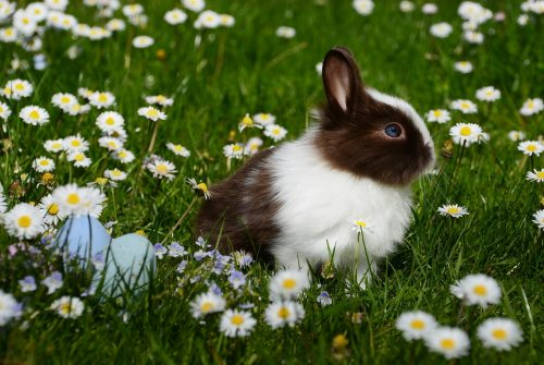 Een konijn in een weide met bloemen
