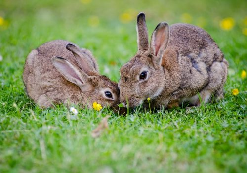 Twee konijnen die onze voeders eten