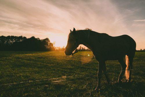 Een paard in een wei