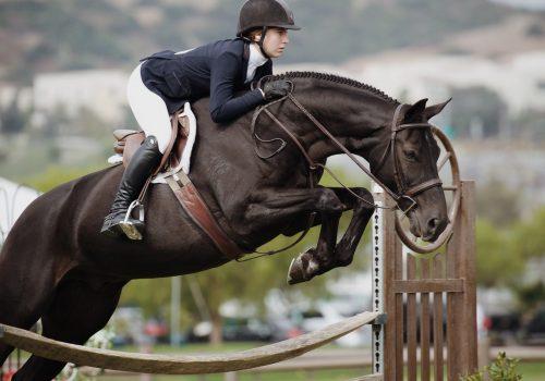 Een ruiter op een paard dat springt over een hindernis